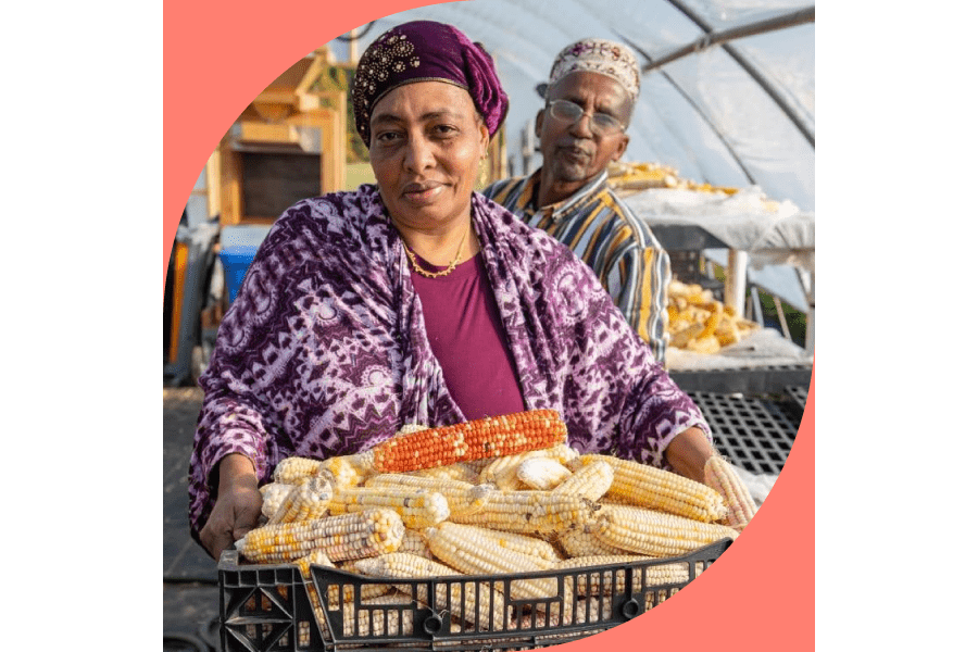 man and woman preparing corn to cook